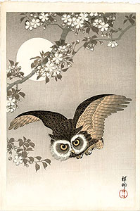 Koson: Flying scops owl