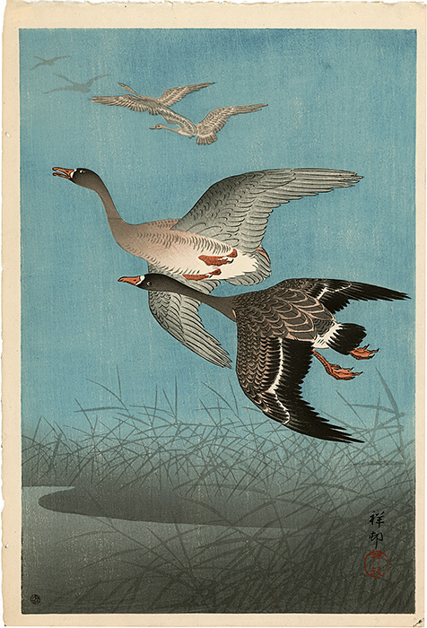 Koson - Flying wild gooses