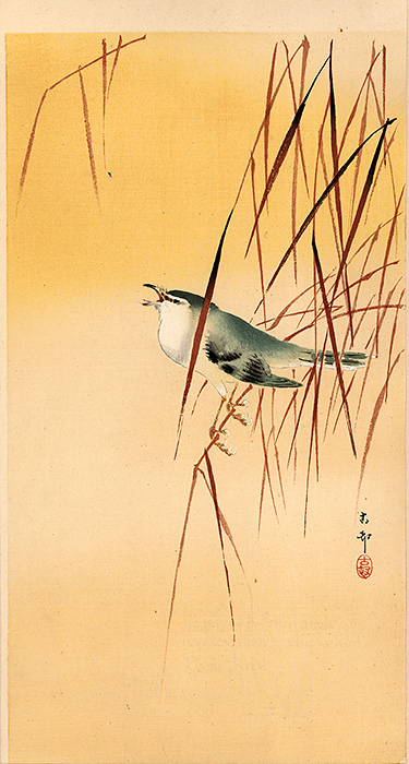 Koson - Small bird