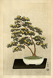 Nisaburô - Bonsai