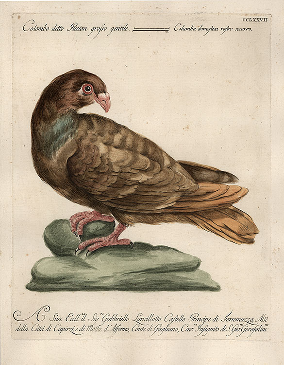 Manetti - Brown dove